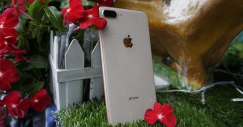iPhone chưa bị chai pin, iPhone xách tay có được thay pin giá rẻ không?